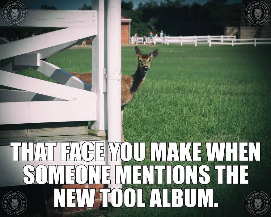 tool-new-album2